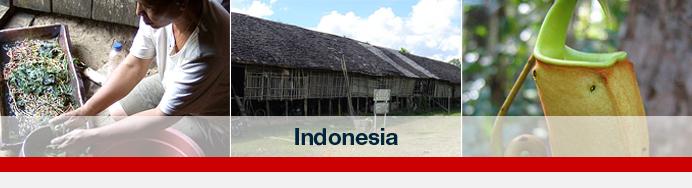 indonesia-header