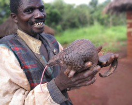 Pangolin - winner!