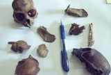 FL_bones_collected_20